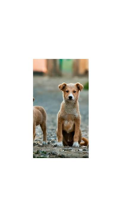 Iphone Dog Animal Puppy Pet Wallpapers