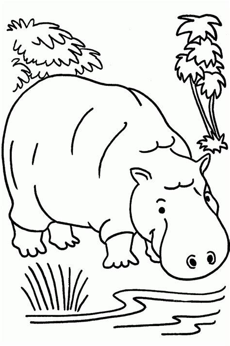 desenhos para colorir hipopótamo desenhos para pintar e