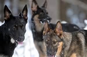 Police German Shepherd Memes