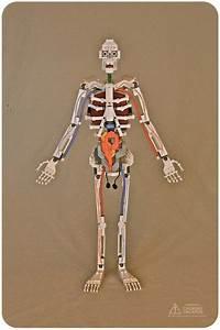 Lego Anatomy Models