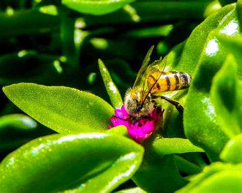 species  bees added  endangered list climate institute