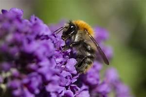 Bienen Und Wespen : bienen hummeln wespen ~ Whattoseeinmadrid.com Haus und Dekorationen