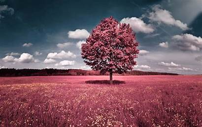 Pretty Nature Backgrounds Wallpapers Pink Pc