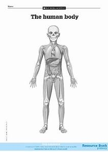 Diagram Of The Human Body  U2013 Free Primary Ks2 Teaching