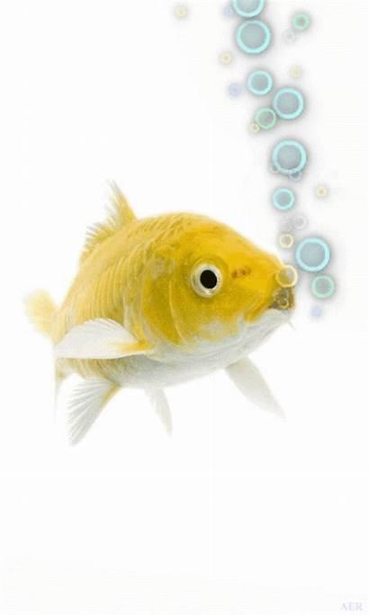 Animated Mobile Fish Wallpapers Samsung Animation Goldfish