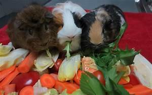 Fütterungsbesonderheiten bei, kaninchen