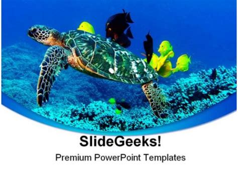 turtle animal powerpoint template  template
