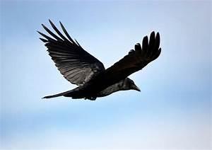 Birds In Flight Quotes. QuotesGram