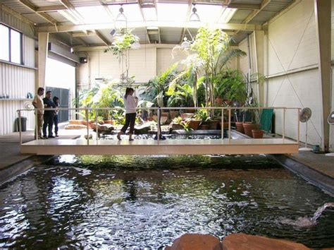 Homes With Indoor Ponds by 17 Best Images About Indoor Pond On