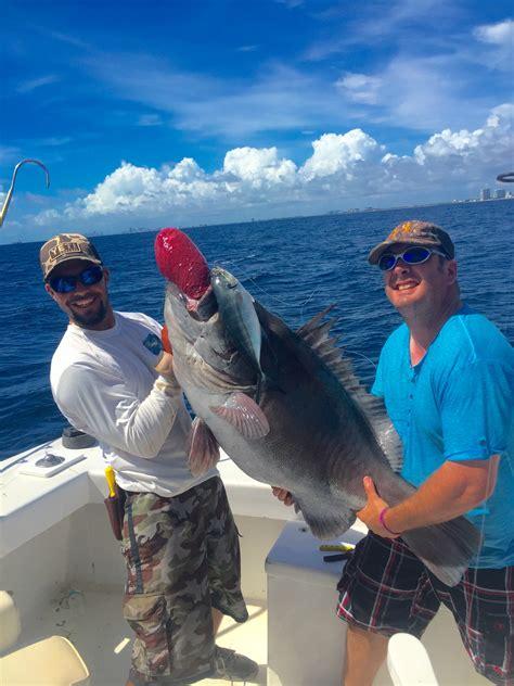 grouper warsaw lauderdale fish charters biting ft sportfishing charter caught huge fishing