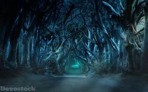 Devostock, Dark, Shadow, Scary, Forest, Design, 4k