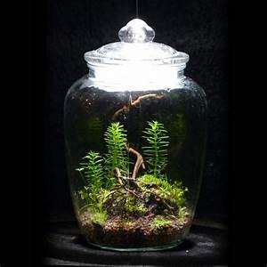 Minigarten Im Glas : do it yourself pflanzen glasglocke und garten pflanzen ~ Eleganceandgraceweddings.com Haus und Dekorationen