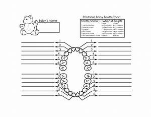 Baby Teeth Chart Template