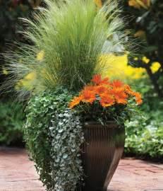Ornamental Grass Container Garden