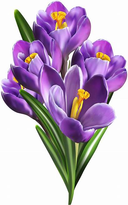 Flowers Clipart Purple Flower Clip Crocus Spring