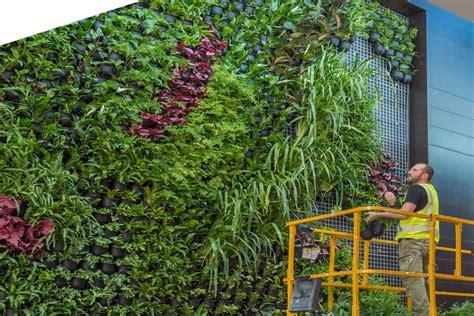 vertical gardens  brisbane sydney melbourne wall