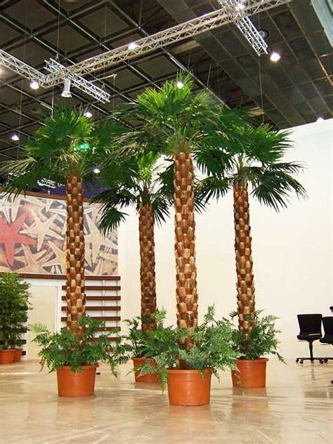 Palmen Für Innen by Kunstpalmen Mit Natur Oder Glasfaserstamm F 252 R Innen