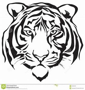 Face Tiger Royalty Free Stock Images