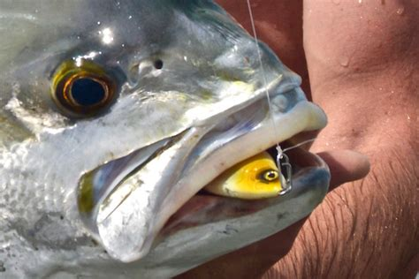 lethal spring time lures  fishing  cape  canal