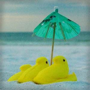 Cool Chicks on ... Easter Beach Quotes