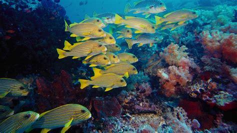 Imax Under The Sea Bluray