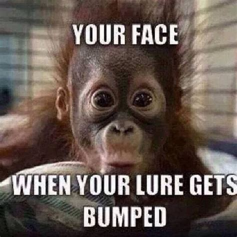 Monkey Face Meme - 47 very funny monkey memes images pictures gifs photos picsmine