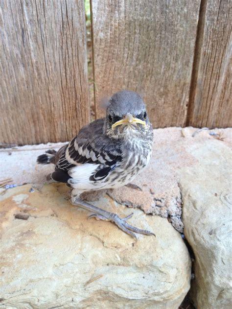 to save a mockingbird paula scott
