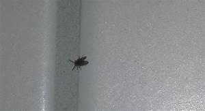 Kleine Käfer In Der Küche : kleine schwarze fliegen in der k che wohndesign ~ Frokenaadalensverden.com Haus und Dekorationen