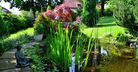 evier cuisine ancien les plantes aquatiques pour bassin de jardin