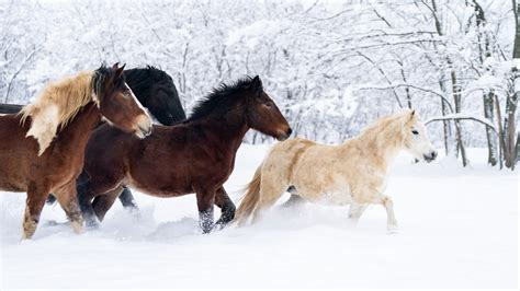 horses horse winter cold care