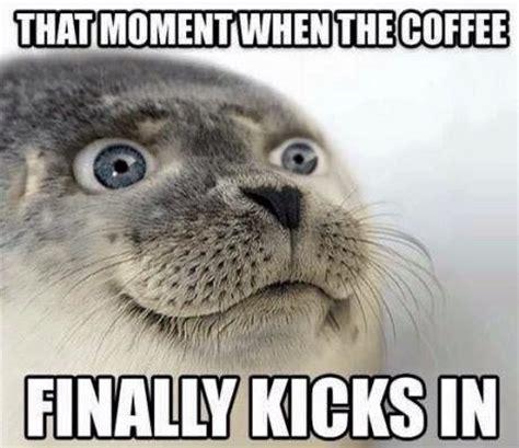Seal Meme - that beautiful moment