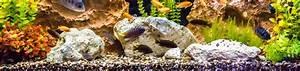 Tiere Für Aquarium : aquarium bodengrund kies mehr teichpoint aquaristik shop ~ Lizthompson.info Haus und Dekorationen