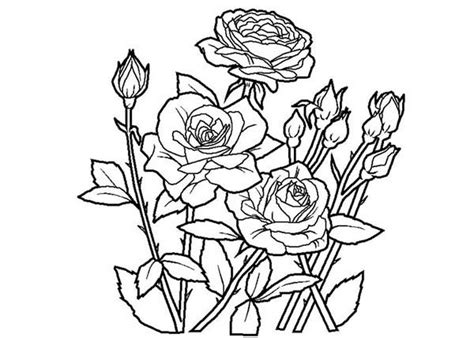 New Fresh Rose Coloring Page