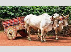 La tradición costarricense de decorar las carretas
