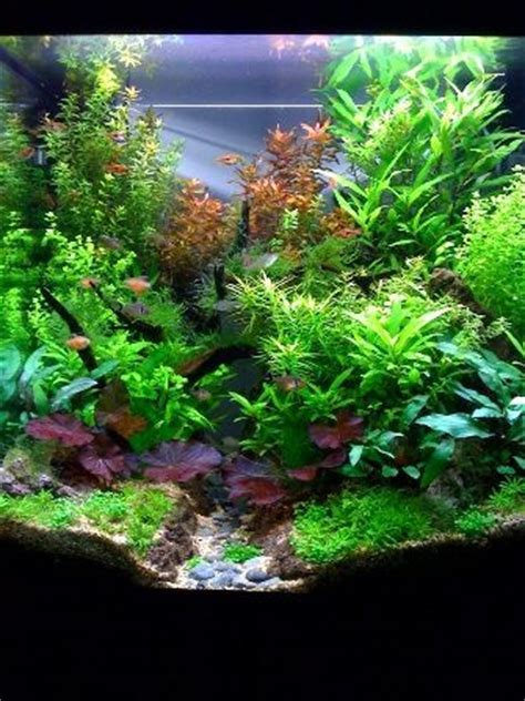 17 best ideas about fish tank wall on home aquarium amazing aquariums and fish tanks