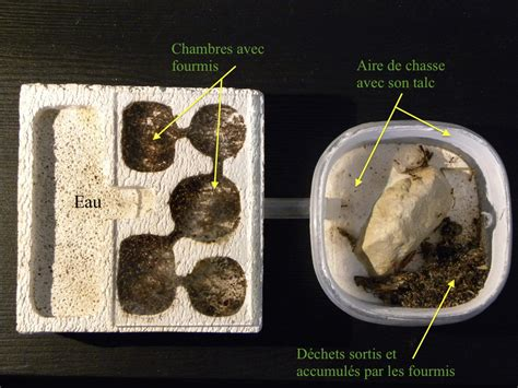comment humidifier l air d une chambre comment construire une fourmilière