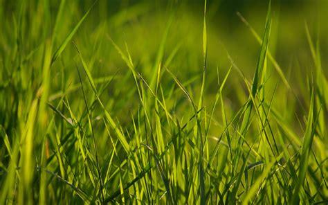 esperanza gates grass background