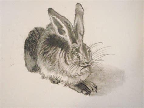 rabbit sketch albrecht durer  nivalia  deviantart