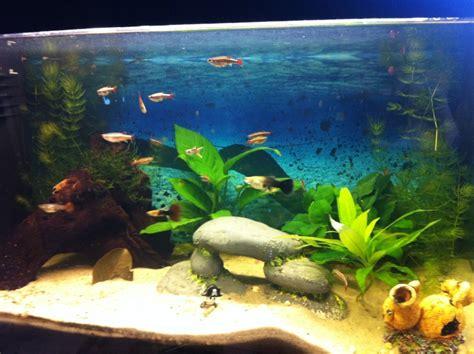 offre d emploi aquarium aquarium mon aquarium d eau douce de 60 l page 3