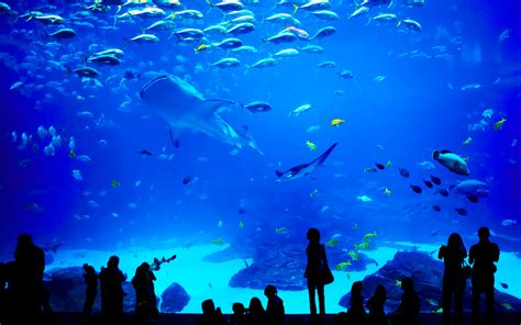 le plus grand aquarium de le grand aquarium destination malo