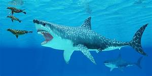 Could Megalodon Still Be Alive? - Welcome To SharkSider.com!
