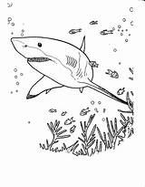Coloring Sharks Pages Simple Children Animals sketch template