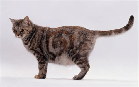 cat pregnancy understanding pregnancy and birth in cats
