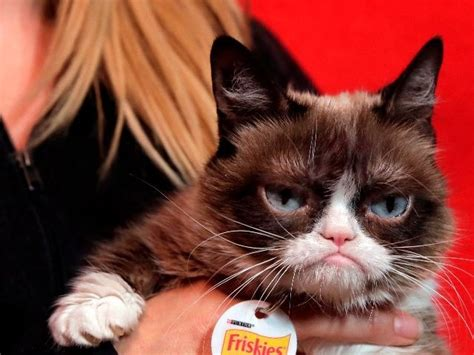 report living meme grumpy cat awarded