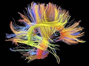 U0026 39 Wiring Diagrams U0026 39  Link Lifestyle To Brain Function