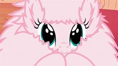 Puff Fluffle Pony Mlp Gifs Unicorn Fluffy