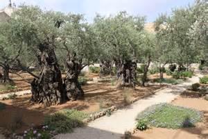 garden of gethsemane jesus pressed at the garden of gethsemane the pastor