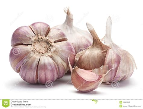 is garlic a vegetable top 28 is garlic a vegetable garlic vegetable with green parsley leaves stock photos