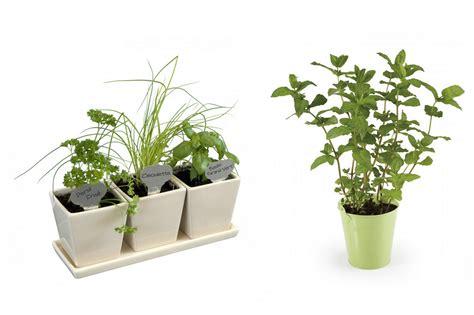 entretenir un azalee d interieur comment bien entretenir sa plante d int 233 rieur