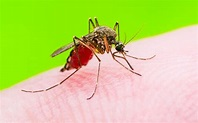 5 DEET-Free Ways to Protect Yourself From Bugs   Sierra Club